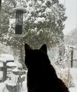 Cat looking at snow covered backyard